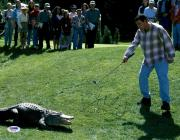 "Adam Sandler Autographed 11"" x 14"" Happy Gilmore Pointing at Gator Photograph - PSA/DNA"