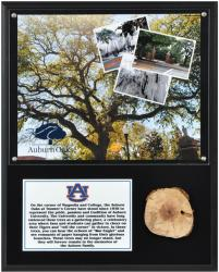 Auburn Tigers Oaks at Toomer's Corner 12'' x 15'' Plaque with Piece of Authentic Oak