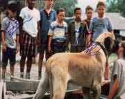 Chauncey Leopardi Marty York Victor DiMattia Signed 11x14 Sandlot Photo Beckett