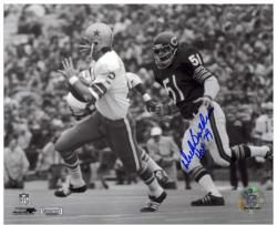 "Dick Butkus Chicago Bears Autographed 8"" x 10"" Chasing Roger Staubach Photograph with HOF 79 Inscription"