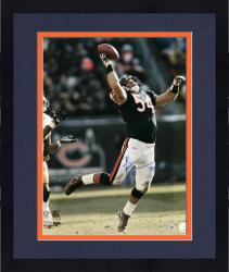 Framed Brian Urlacher Chicago Bears Autographed 16'' x 20'' vs Green Bay Packers Photograph