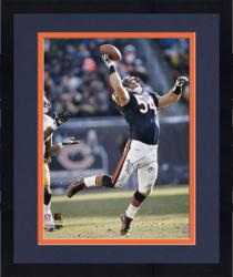 Framed Chicago Bears Brian Urlacher Autographed 16'' x 20'' Photo