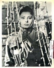 Sophia Loren Signed Jsa Certified 8x10 Photo Authentic Autograph