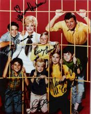 """THE BRADY BUNCH"""" Signed by HENDERSON, MCCORMICK, PLUMB, OLSEN, WILLIAMS, KNIGHT, and LOOKINLAND - 8x10 Color Photo"""